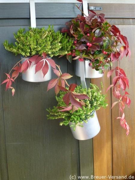Mehrere mit Blumen bestückte Alu Milchmesser ineinander gehängt.  Dekoration nicht im Preis enthalten.